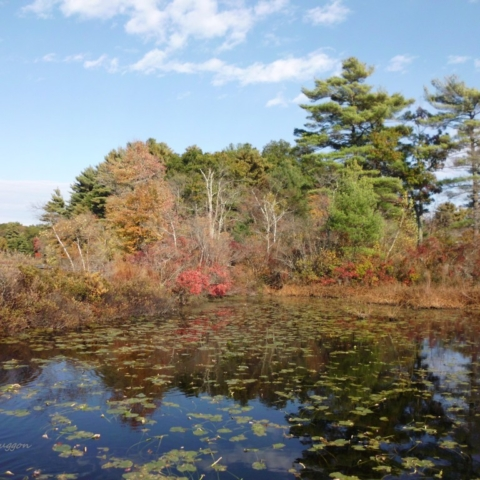 Autumn Reflections - Stony Brook Wildlife Sanctuary - Norfolk MA - Copy