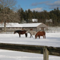 Three horses on a snowy day