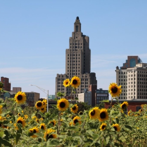 Sunflowers of Providence. Photo by Jonathan Huggon, All Things Possible.