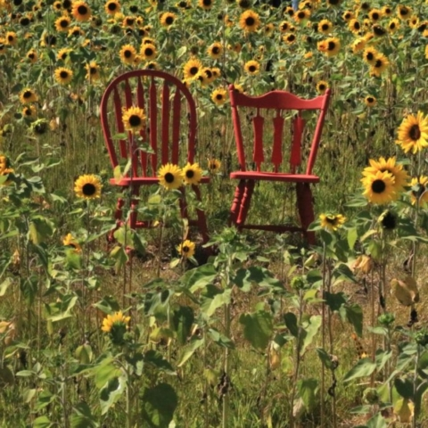 Two Chairs. Photo by Jonathan Huggon.